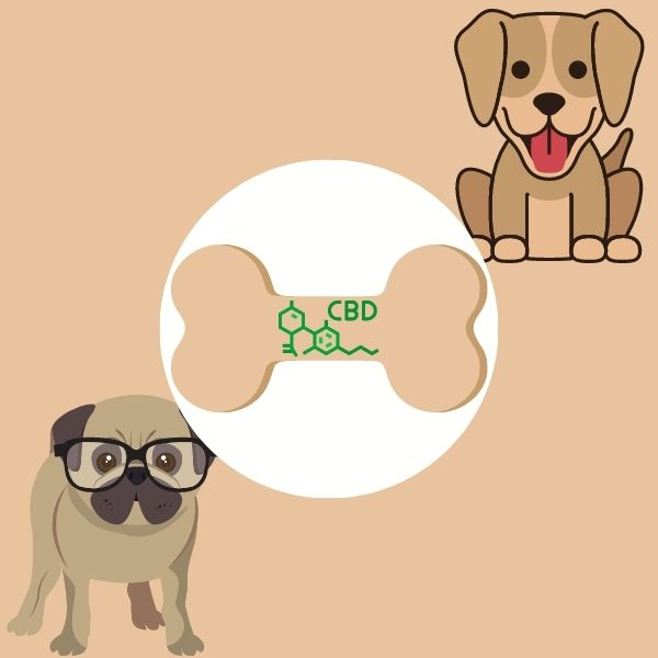 CBD dog treats for two puppies