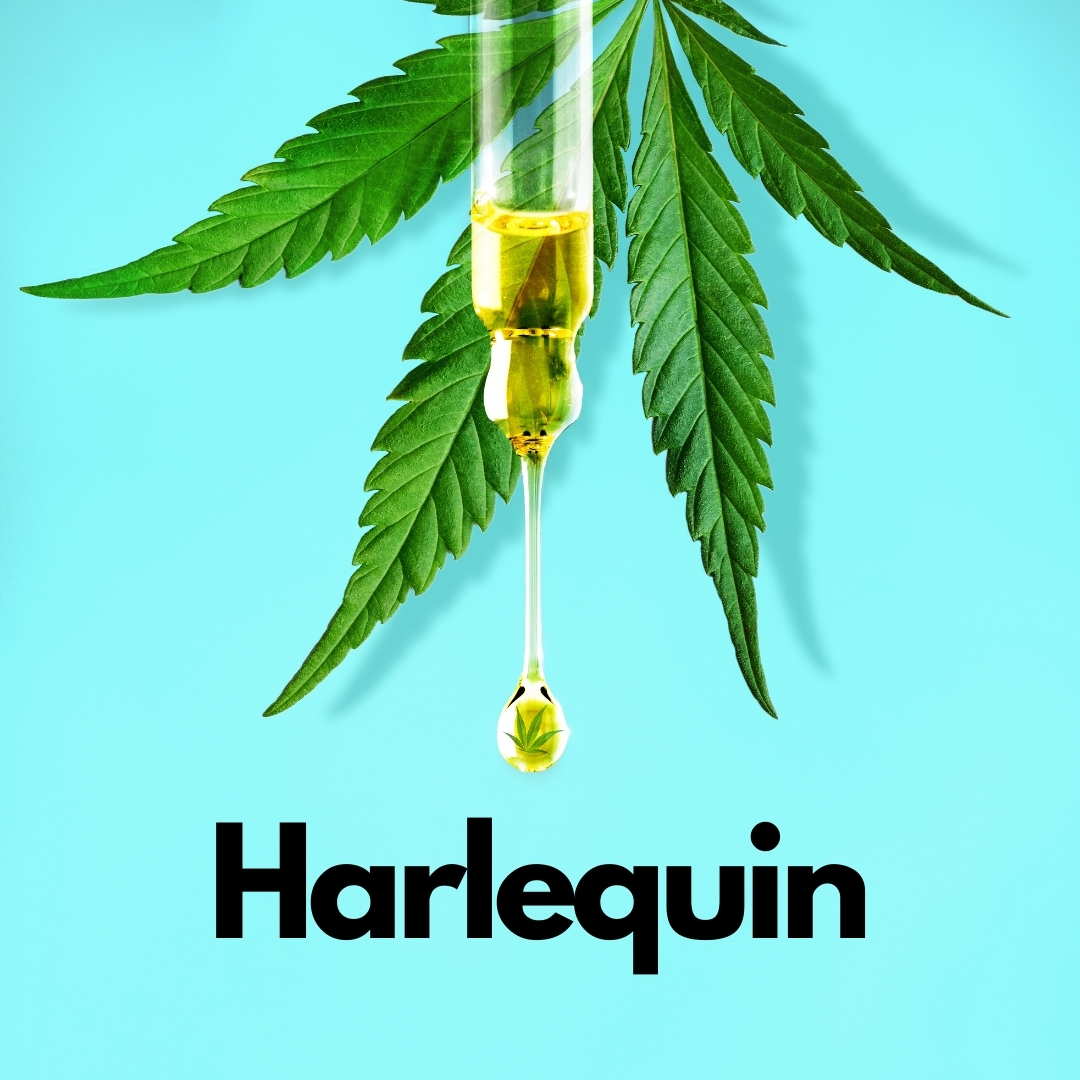 CBD liquid infront of a cbd plant with a blue background and text saying Harlequin